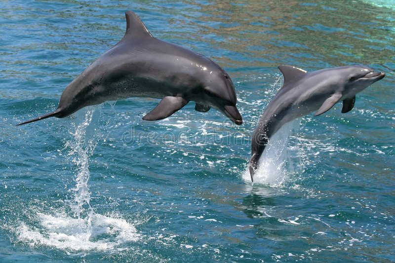 Il salto dei delfini