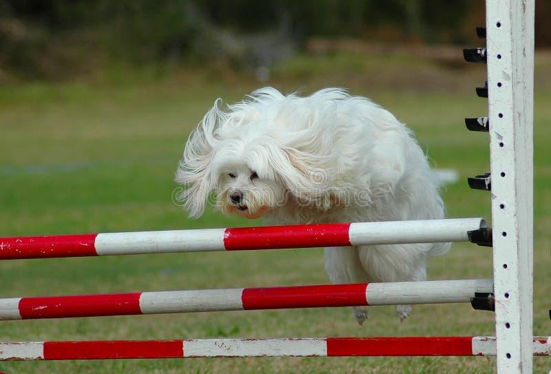 Il salto del cane fotografie stock libere da diritti