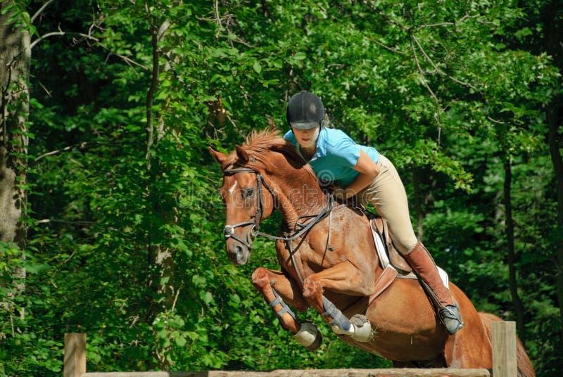 Il salto del cavallo immagine stock