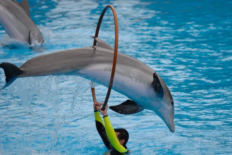 Il salto del delfino fotografie stock