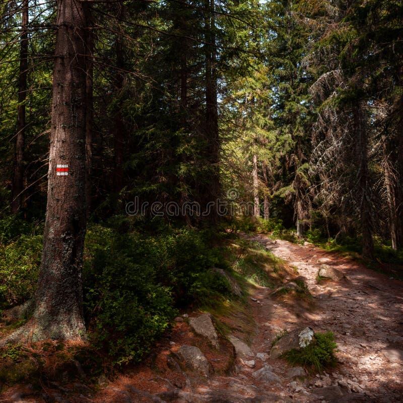 Il segno della traccia di escursione segna dipinto su un albero Depressione principale del percorso bello Forest National Park de fotografie stock