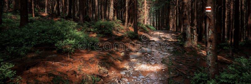 Il segno della traccia di escursione segna dipinto su un albero Depressione principale del percorso bello Forest National Park de fotografia stock libera da diritti