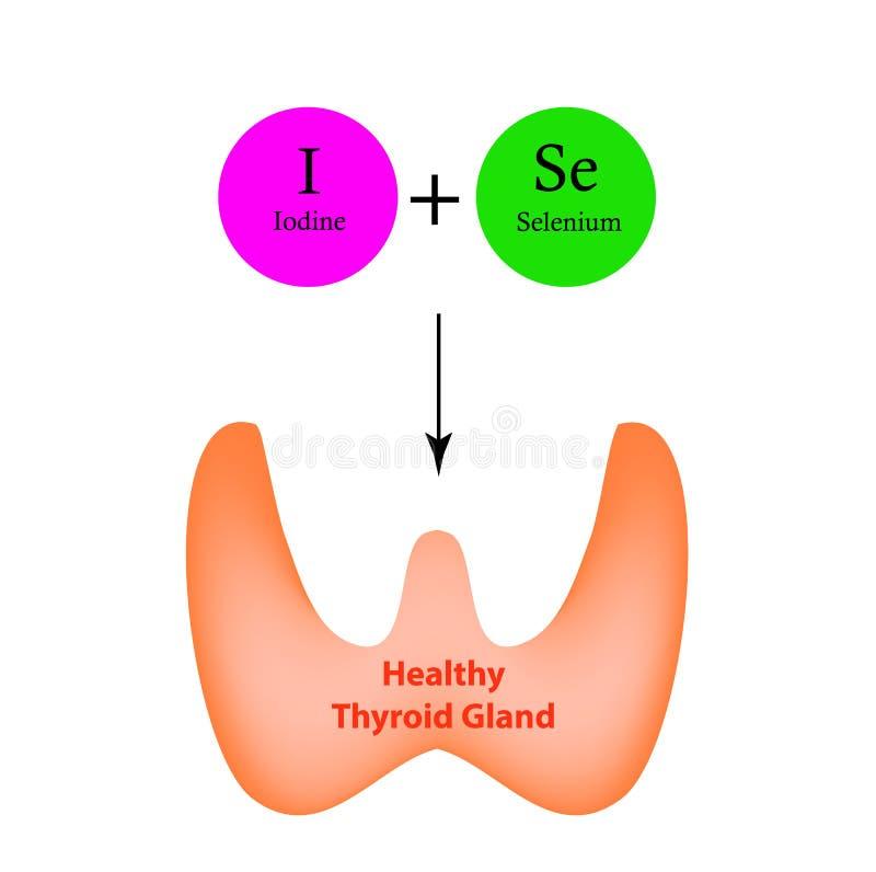 Il selenio e lo iodio sono necessario per il funzionamento normale della ghiandola tiroide Infographics Vettore illustrazione vettoriale