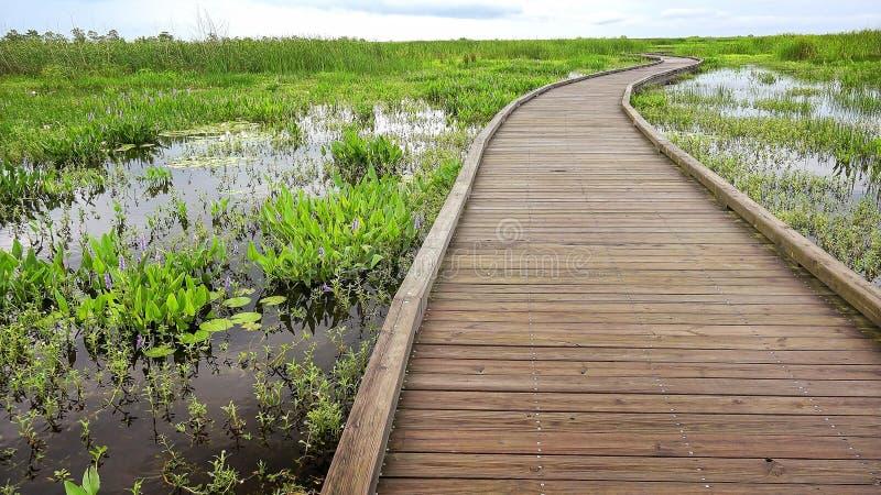 Il sentiero costiero curva attraverso una palude e le zone umide in Louisia immagini stock