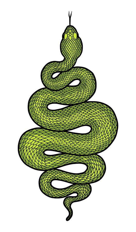 Il serpente arrotolato ha dettagliato l'illustrazione illustrazione vettoriale