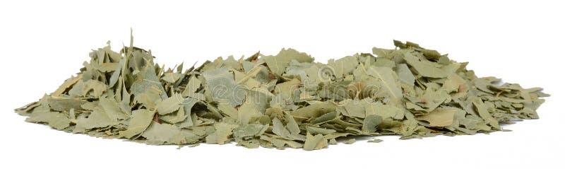 Il sicomoro va, foglie del sicomoro si asciuga, foglie del sicomoro dired fotografie stock