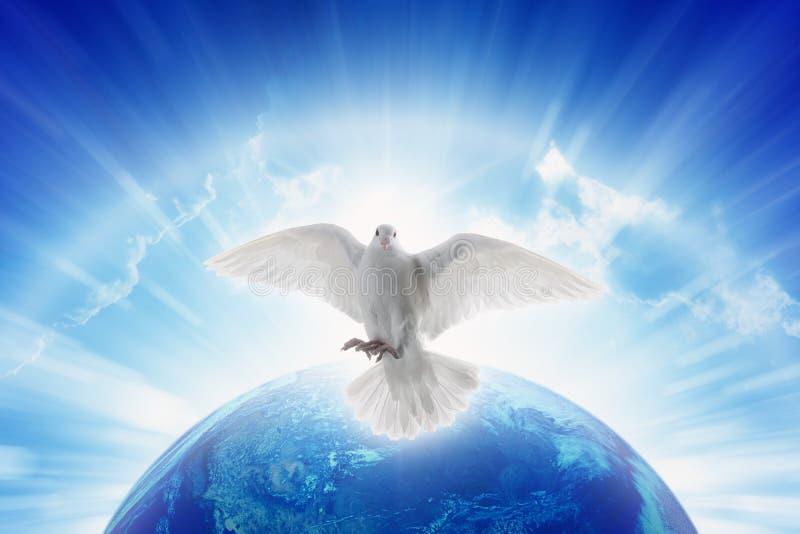 Il simbolo della colomba di bianco di amore e di pace vola sopra pianeta Terra fotografie stock libere da diritti