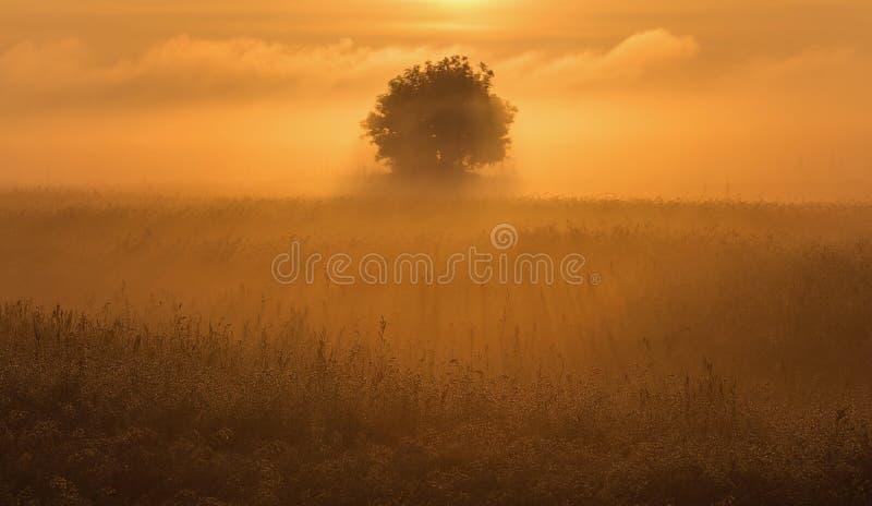 Il singolo albero fotografia stock