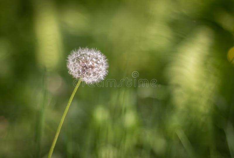 Il singolo fiore immagine stock