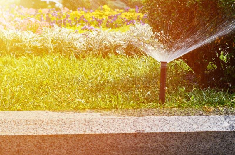 Il sistema di innaffiatura automatico per prato inglese ed i fiori nella città parcheggiano, effetto di luce solare fotografia stock