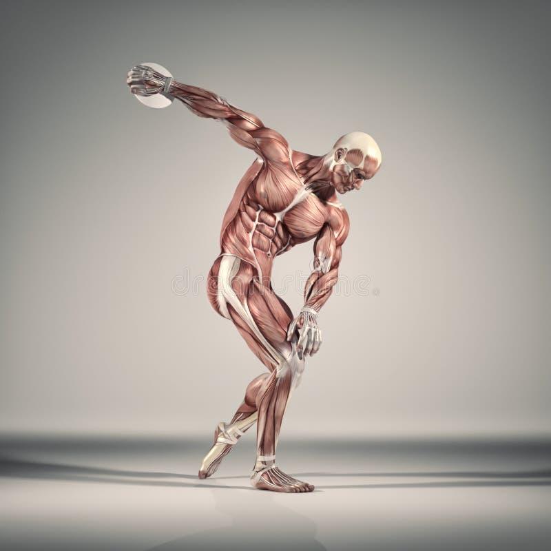 Il sistema muscolare illustrazione vettoriale