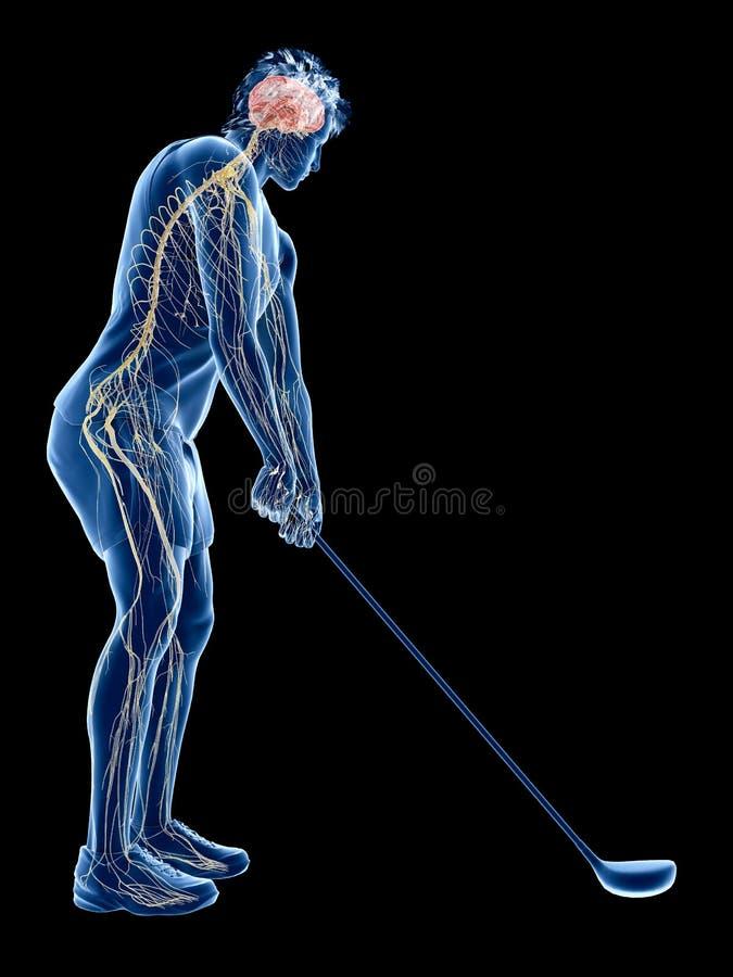 Il sistema nervoso di un giocatore di golf illustrazione vettoriale