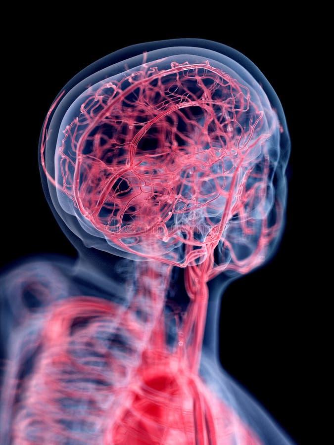 Il sistema vascolare della testa illustrazione vettoriale