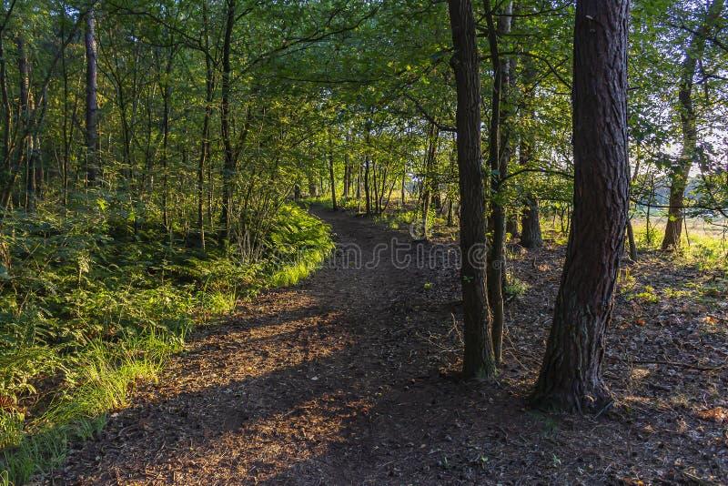 """Il sole basso splende ad un percorso attraverso la foresta ha chiamato """"i contrabbandieri itinerario """"vicino a Strijbeek, Paesi B fotografie stock"""