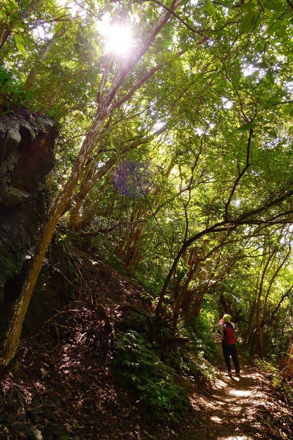 Il sole dell'abbagliamento è rivelato fra gli alberi verdi fotografia stock