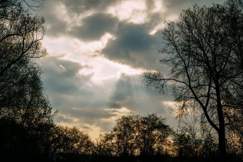 Il sole dell'innovazione con si rannuvola la foresta e gli alberi dopo una tempesta fotografia stock