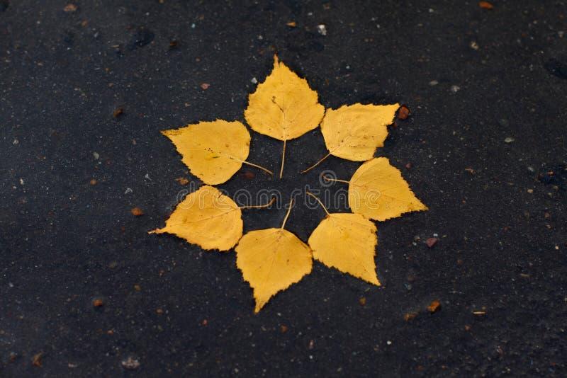 Il sole di autunno fotografia stock