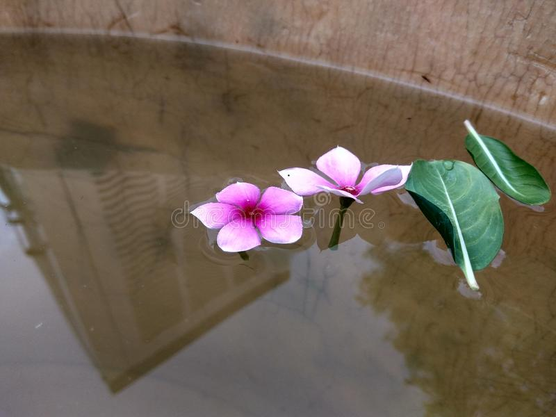 il sole di fotografia della natura fiorisce i inscets di creatività dell'argilla immagine stock libera da diritti