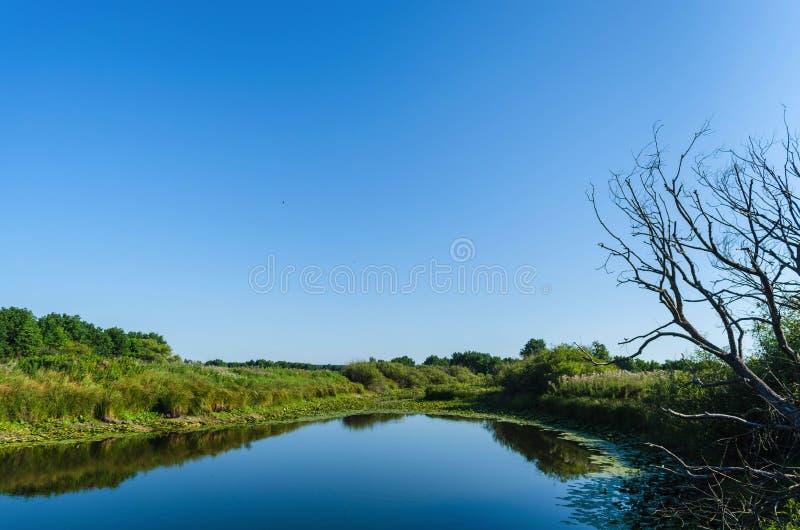 Il sole di mattina entra nella foresta decidua circondata da foschia che galleggia sopra l'acqua fotografia stock libera da diritti