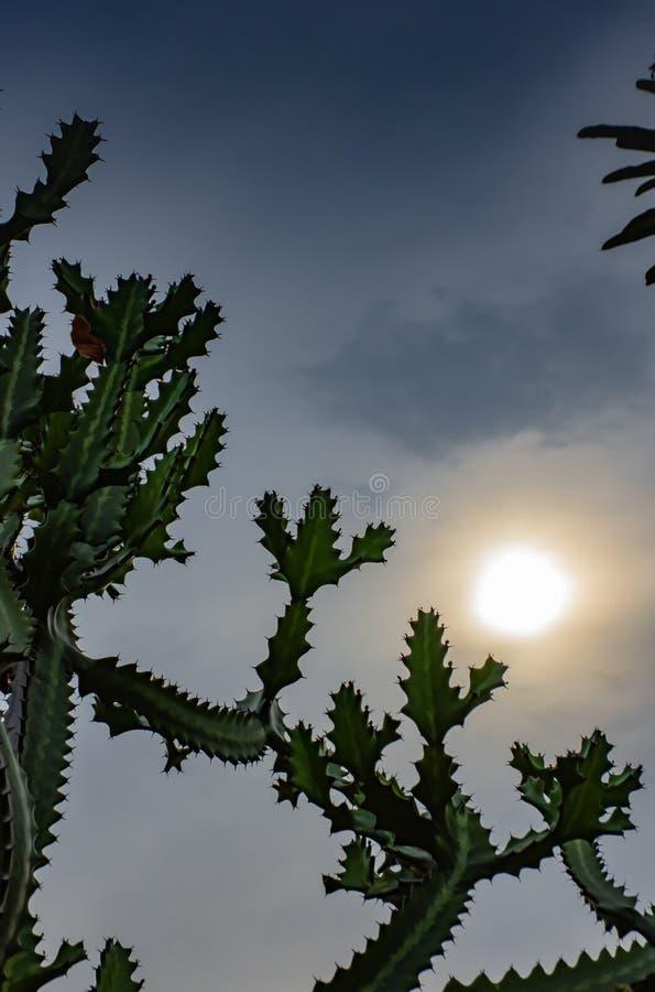 Il sole di mattina era annuvolamento dietro un cactus fotografia stock libera da diritti