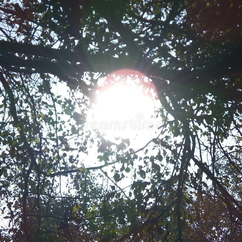 Il sole ha visto fra le foglie fotografie stock