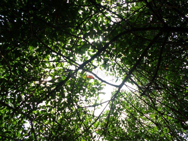 Il sole tramite le foglie fotografie stock libere da diritti
