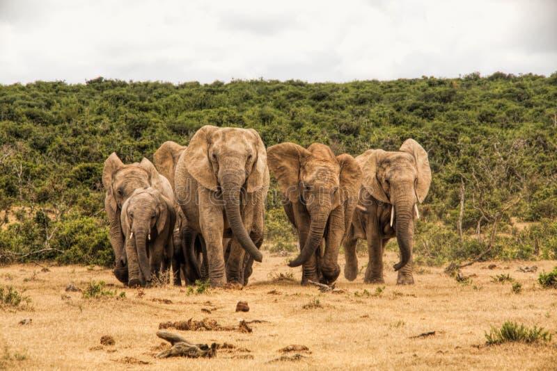 Il Sudafrica - Sabi Sand Game Reserve fotografie stock libere da diritti