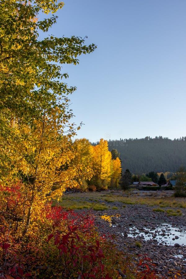 Il Sun evidenzia l'autunno ha colorato gli alberi lungo il fiume di Naches immagini stock