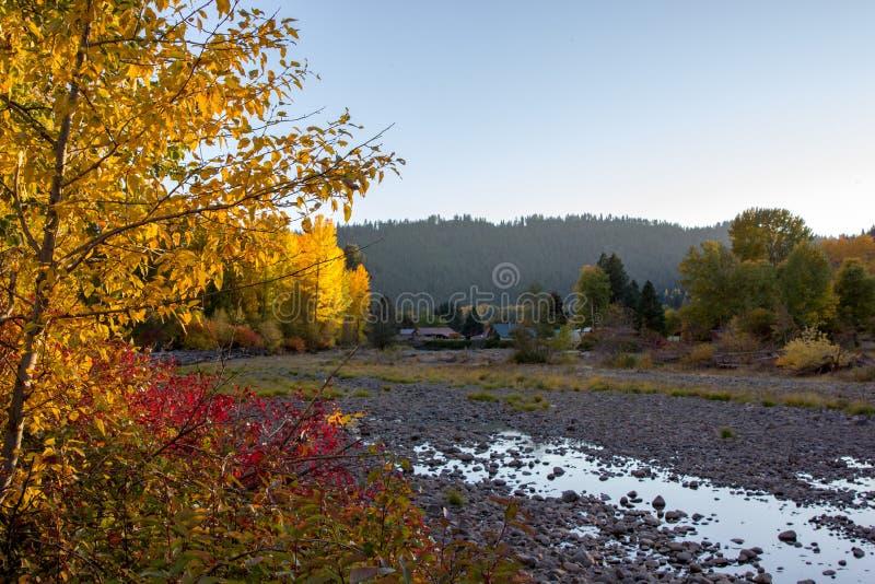 Il Sun evidenzia l'autunno ha colorato gli alberi lungo il fiume di Naches fotografia stock libera da diritti