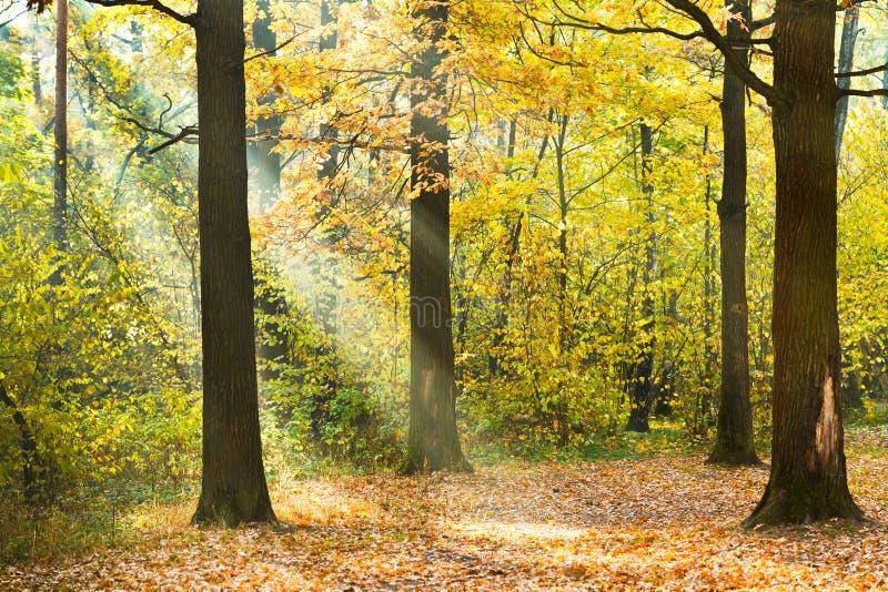 Il sun ha acceso il prato inglese nella foresta di autunno - Soleggiato in inglese ...