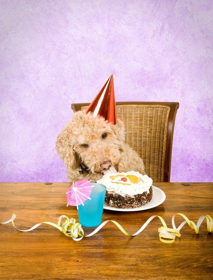 Il suo mio partito! immagine stock