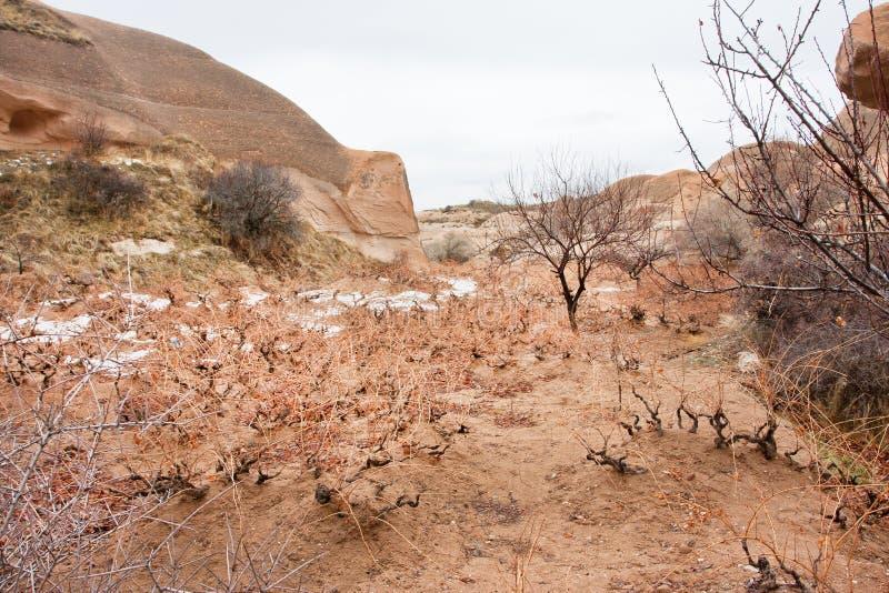 Il suolo ed i giovani tiri dell'uva si sviluppano in suolo freddo di una valle della montagna fotografia stock