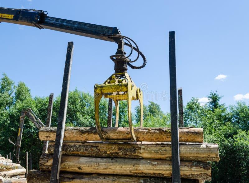 Il taglio di legno di caricamento della taglierina del macchinario collega il rimorchio immagine stock libera da diritti