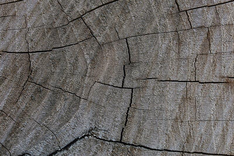 Download Il taglio di un albero fotografia stock. Immagine di background - 56887530