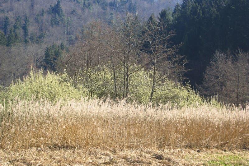 Il teleobiettivo ha sparato di una foresta in primavera immagine stock