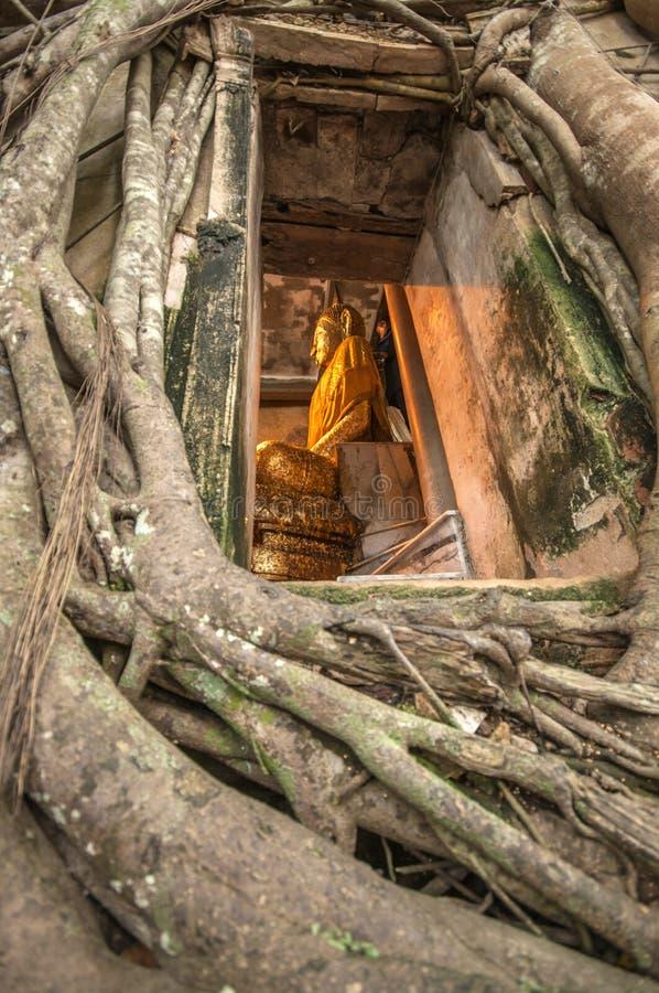 Il tempio dell'albero di banyan, Tailandia immagine stock libera da diritti