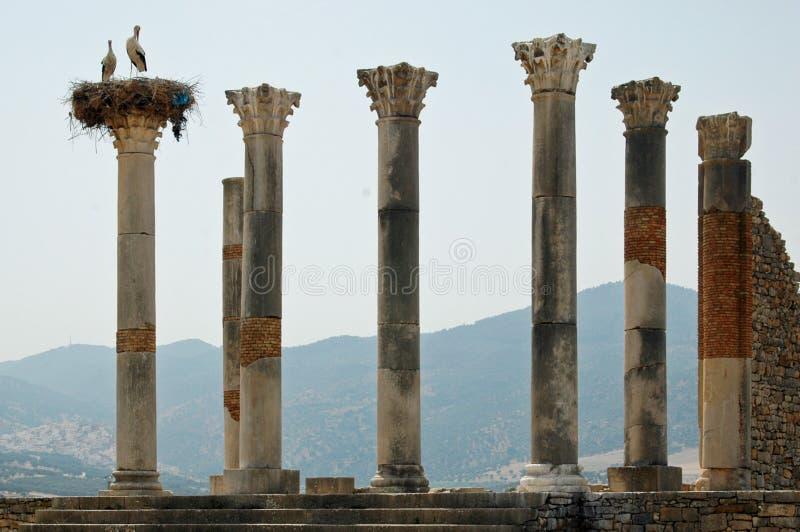 Il tempio di Capitoline, Volubilis, Marocco fotografie stock libere da diritti