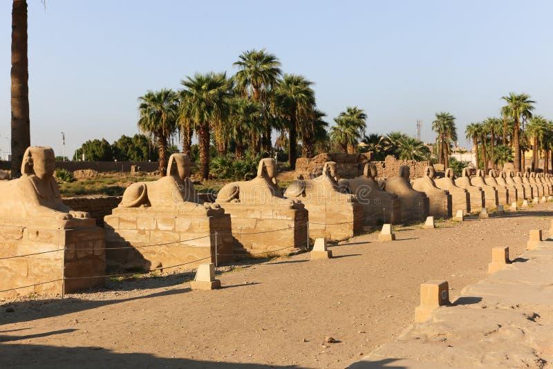 Il tempio di Luxor - l'Egitto immagine stock libera da diritti