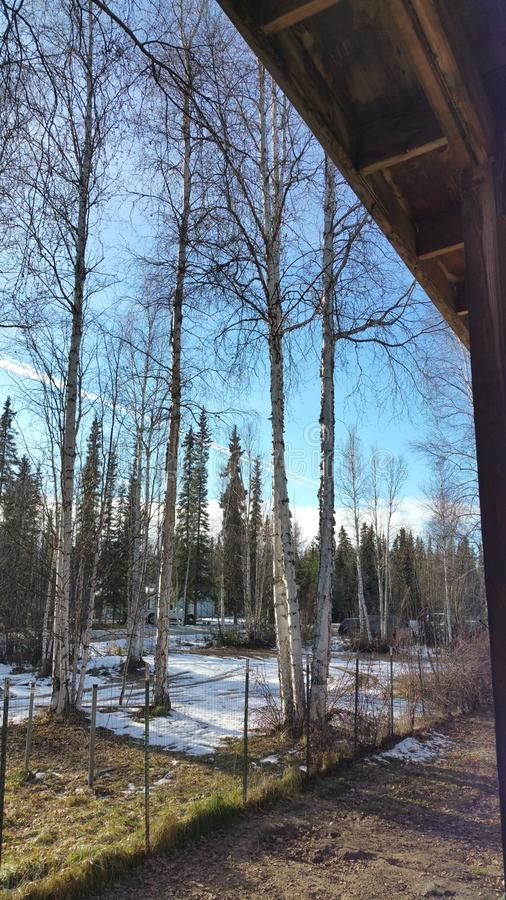 Il tempo di primavera… è aumentato foglie, sfondo naturale immagini stock libere da diritti