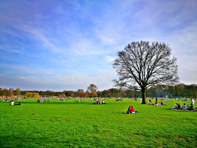 Il tempo di primavera… è aumentato foglie, sfondo naturale immagine stock libera da diritti