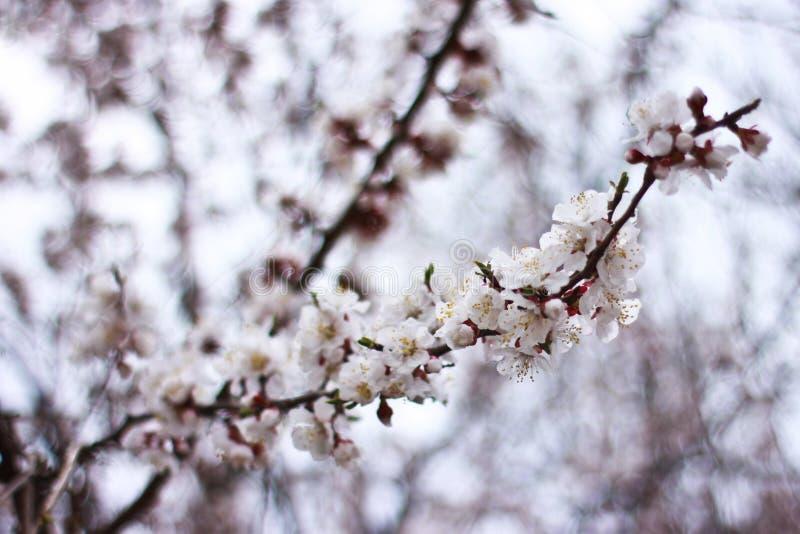 Il tempo di primavera è natura al suo meglio immagine stock libera da diritti