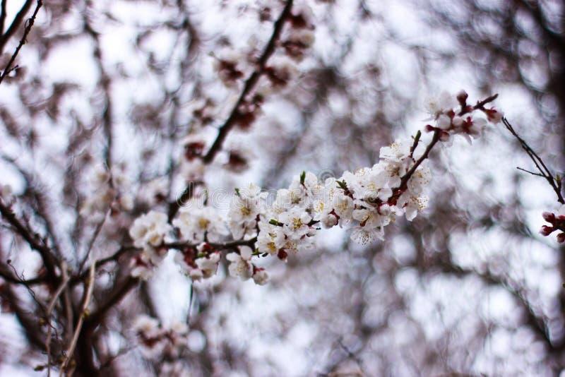 Il tempo di primavera è natura al suo meglio immagine stock