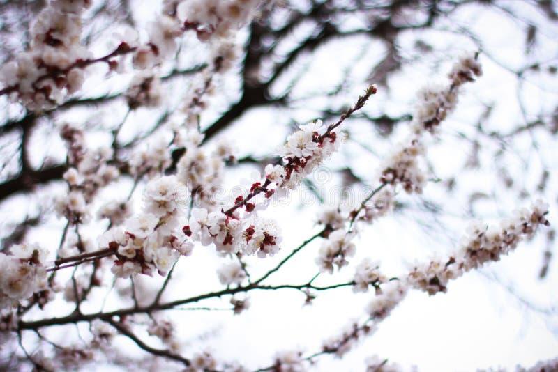 Il tempo di primavera è natura al suo meglio immagini stock