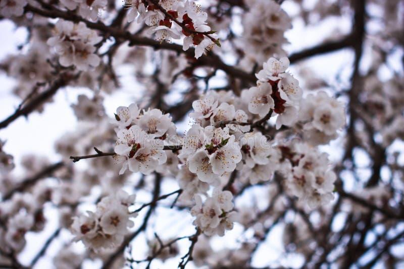 Il tempo di primavera è natura al suo meglio fotografia stock