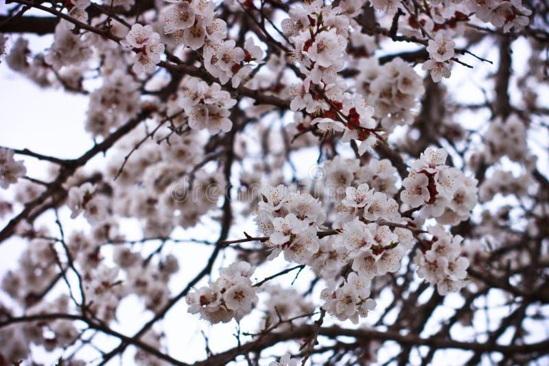 Il tempo di primavera è natura al suo meglio fotografia stock libera da diritti
