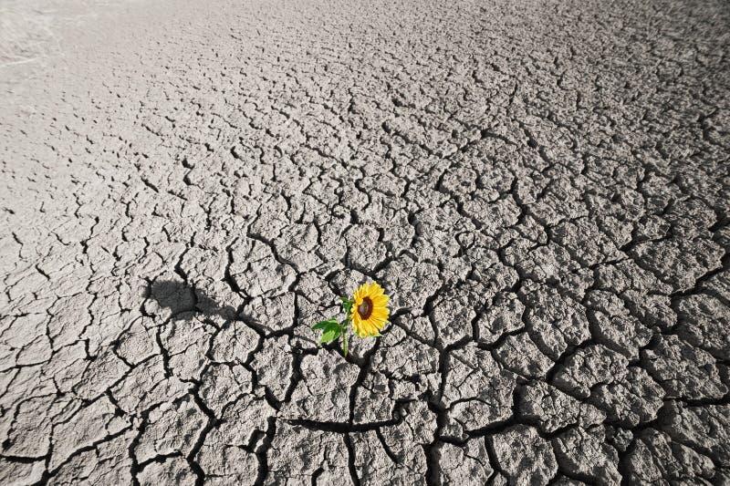 Terreno asciutto e pianta crescente fotografia stock libera da diritti