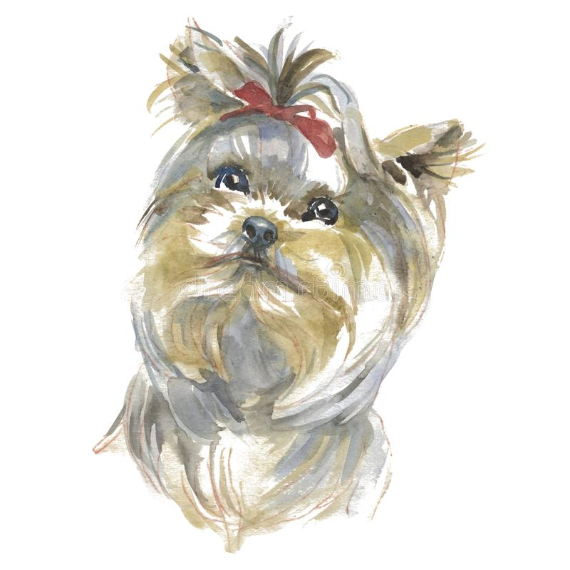 Il terrier del yhorkshire royalty illustrazione gratis