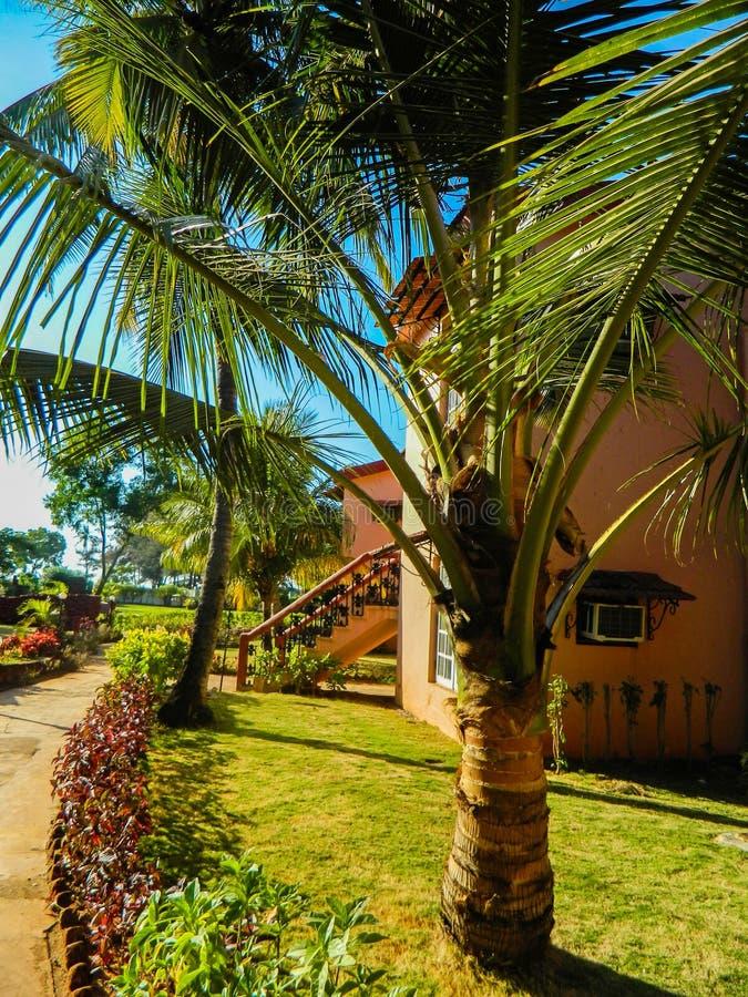 Il territorio dell'hotel in India, Goa immagine stock libera da diritti