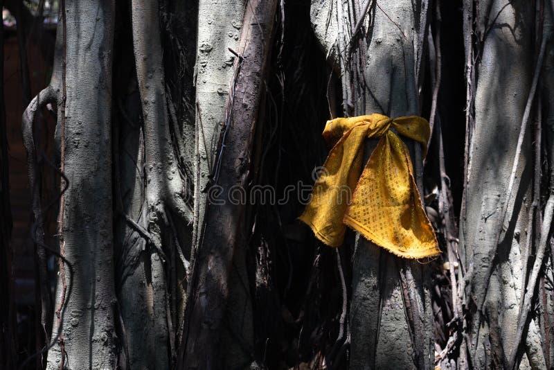 Il tessuto dorato ha avvolto il grande albero sacro per culto il mistero Il posto sacro dei buddisti, albero con i nastri dorati fotografia stock