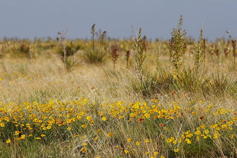 Il Texas fotografie stock libere da diritti